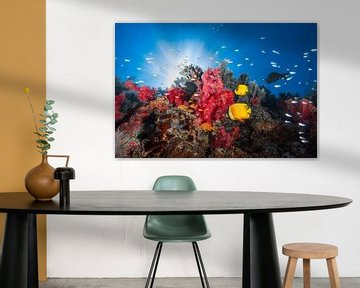 Reef leven, Barathieu Gabriel van 1x