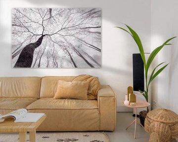 Een weergave van de boom kroon, Tom Pavlásek van 1x