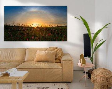 Rote Mohnblumen und Sonnenaufgang, Hua Zhu von 1x