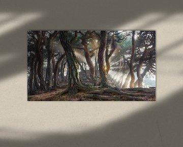 Sacred Pine Trees, Jaeyoun Ryu van 1x