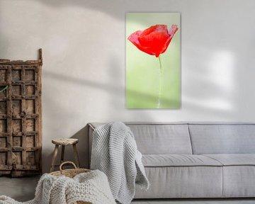 Porträt einer Mohnblume (schmale Porträtversion) von Fotografie Jeronimo
