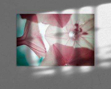 Winde (Ipomoea) macro infrarood van Lars Beekman