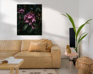 Blume von Arnold Maisner