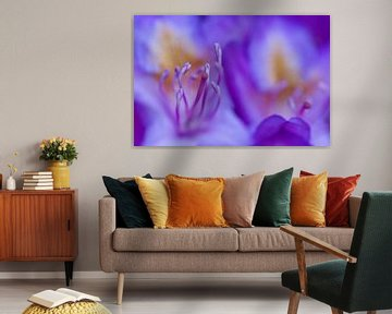 Rhododendron von Eddy 't Jong