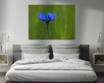 Kornblumenblau (Kornblume) von Caroline Lichthart