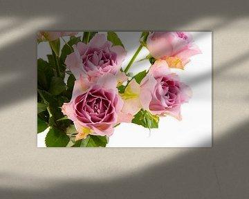 Rosa Rosen freistehend vor weißem Hintergrund von Ivonne Wierink