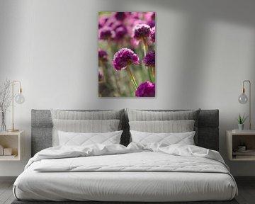 Rosa Blumen in der Morgensonne von Marion Moerland