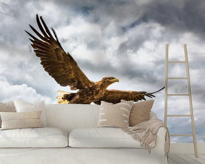 Beispiel fototapete: Seeadler von Frans Lemmens