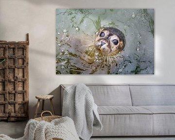 Un phoque curieux