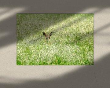 Chevreuil dans l'herbe