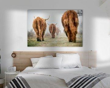 Schotse Hooglanders in ochtendmist van Frans Lemmens