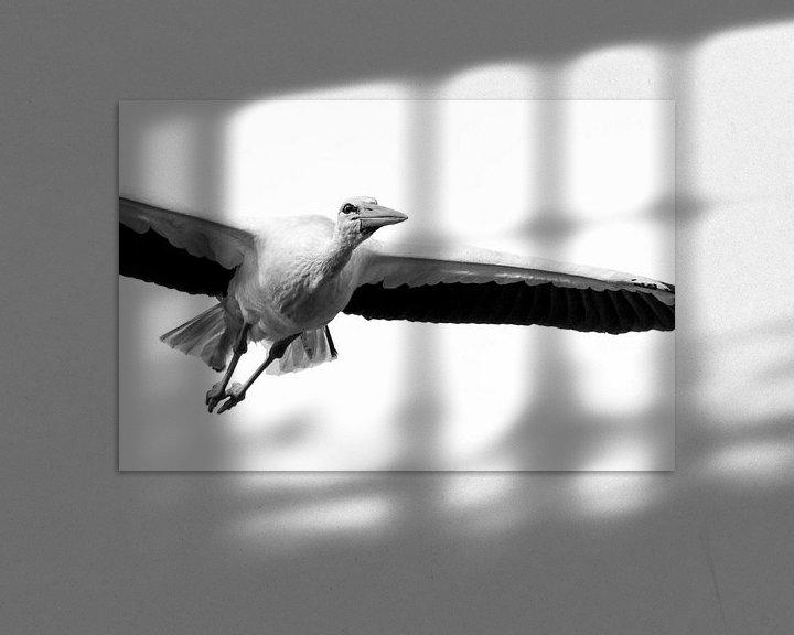 Sfeerimpressie: Ooievaar in vlucht zwart wit van Rando Kromkamp