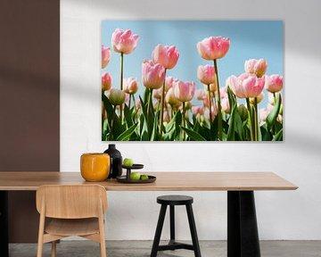 Rosa Tulpen im Blumenzwiebelfeld von Ivonne Wierink