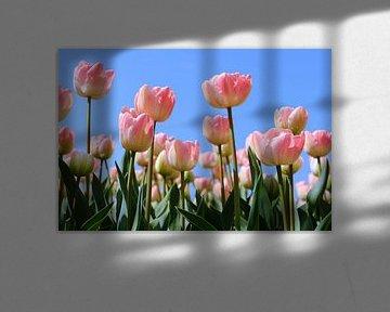 Rosa Tulpen auf dem Feld von Ivonne Wierink