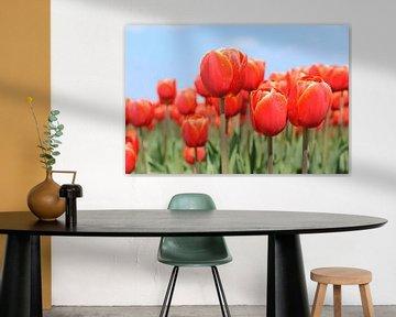 Rote Tulpen im Blumenzwiebelfeld von Ivonne Wierink