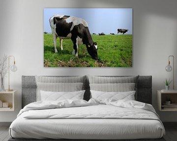 Niederländische Milchkühe auf der Weide von Ivonne Wierink