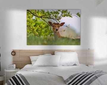 Neugierige Hirsche von Wendy Tellier - Vastenhouw