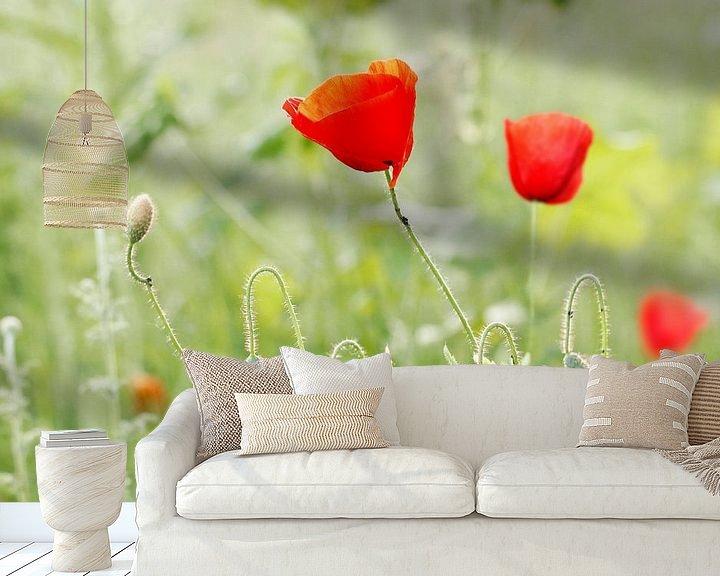 Beispiel fototapete: Mohnblumen von Marjo Snellenburg
