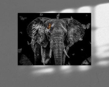 Afrikanischer Elefant von Daliyah BenHaim