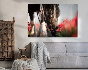 Das Pferd des Bauern zwischen den Tulpen von Daliyah BenHaim