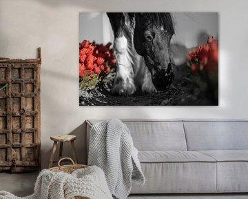 Paard tussen de rode tulpen van Daliyah BenHaim
