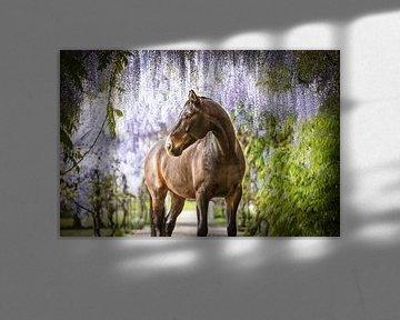 Kwpn-Pferd unter der Glyzinie von Daliyah BenHaim