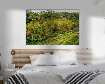 De belles rizières à Ubud (Bali) par un après-midi pluvieux sur Ardi Mulder