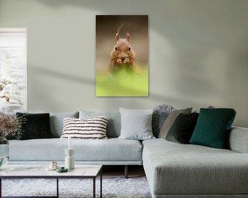 Eekhoorn von Menno Schaefer
