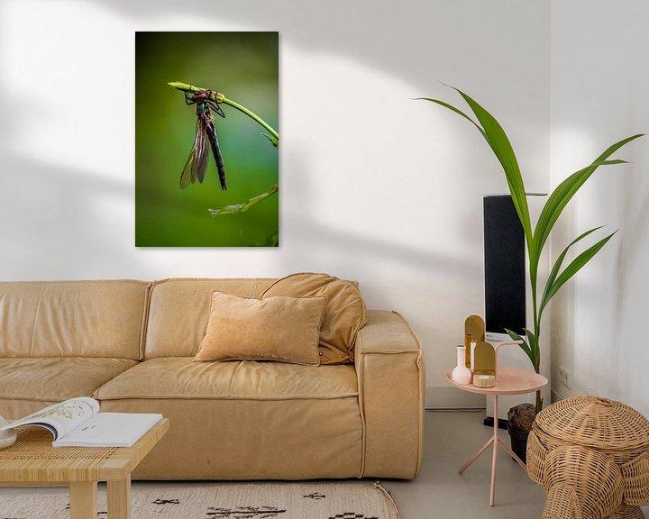 Sfeerimpressie: Libelle op een takje van Natasja Bittner