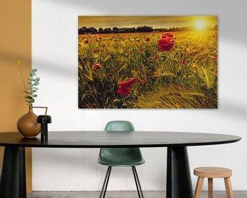 Coquelicots dans un champ de maïs avec le soleil couchant sur Fotografie Arthur van Leeuwen