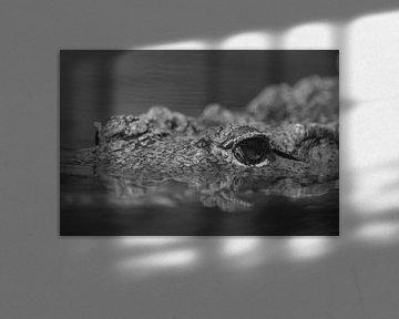 Im Auge des Krokodils (Schwarz-Weiß) von FotoGraaG Hanneke