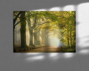 Zonnestralen bij ochtendmist langs bospad. Herfst