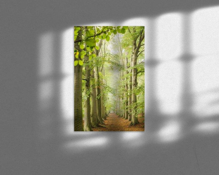 Impression: L'avenue des hêtres le long du chemin forestier, au printemps sur Frans Lemmens