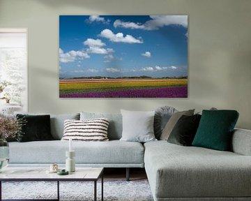 Nederlands plaatje van Menno Schaefer