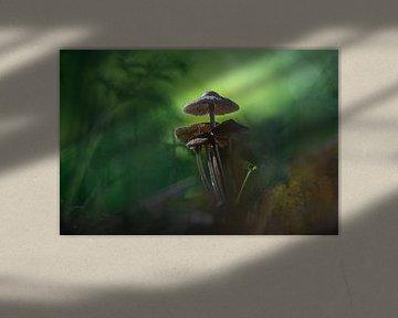 Pilze tropische Insel von Willian Goedhart