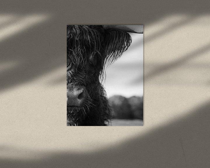 Sfeerimpressie: Close up   Schotse Hooglander zwart wit van Karin Bazuin