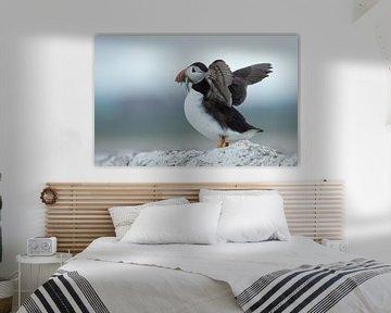 Papegaaiduiker von Menno Schaefer