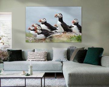 Papegaaiduiker van Menno Schaefer