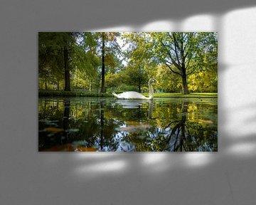 Schwan im Park von Willian Goedhart