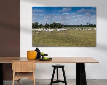 geiten grazen op een grasveld bij een geitenboerderij van Compuinfoto .