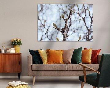 Magnolien von Andrea Fuchs