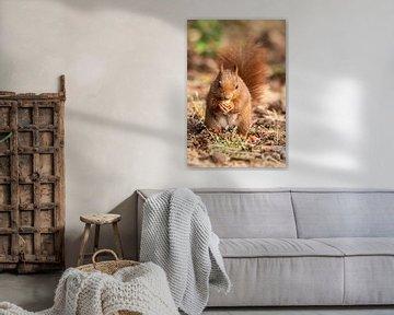 Rotes Eichhörnchen von Henk Roosing
