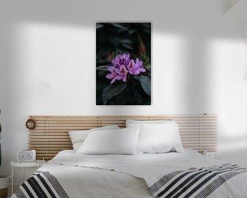 Rhododendron-Blüte. von Prisca Visser