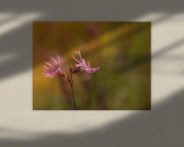 Kuckucksblume von Diane van Veen