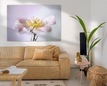 Blühende Rosaceae von Gerry van Roosmalen