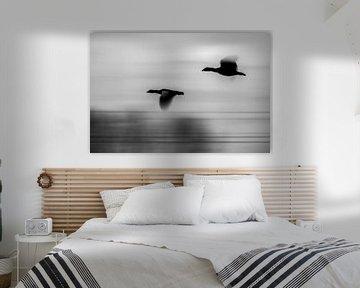 Schwarz/Weiss-Foto von Vögeln mit Geschwindigkeit von bart dirksen