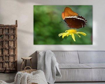 Ein brauner Schmetterling sitzt auf einer gelben Blüte von Ulrike Leone