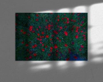 Rot oben von peterheinspictures