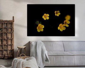 gelb von peterheinspictures