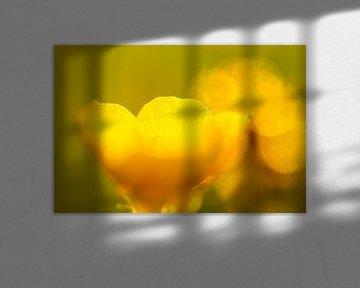 Gelb 2 von peterheinspictures